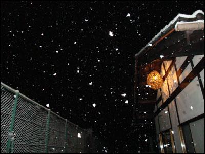 2月初日の雪-2