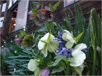 色とりどりの花2
