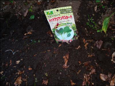 種を蒔きました