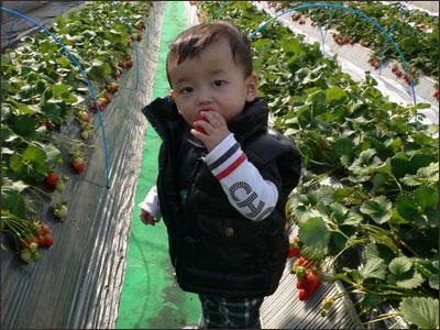 イチゴが似合う男