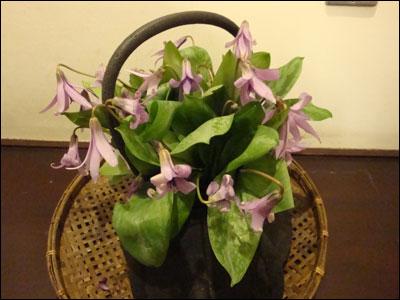 カタクリの花 その2