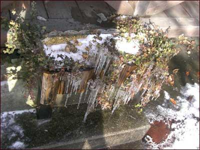 凍った花壇の草