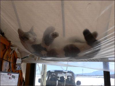 ハンモックで眠る猫