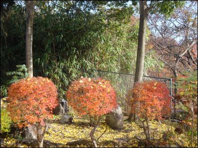 最後の秋-2