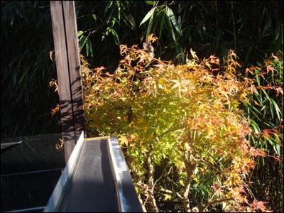 最後の秋-3