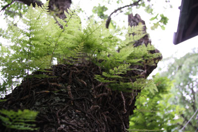 木の中のジャングル