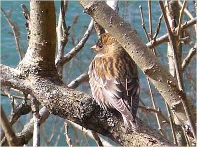 何て名前の鳥?