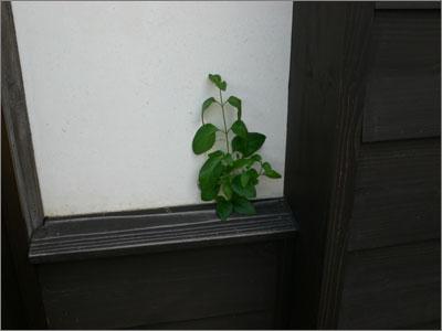 がんばる植物