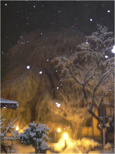 感動の雪桜